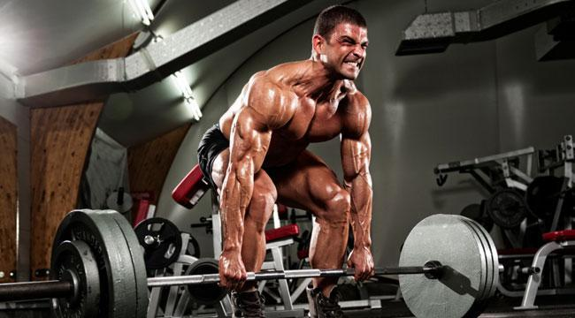 gainmuscle image