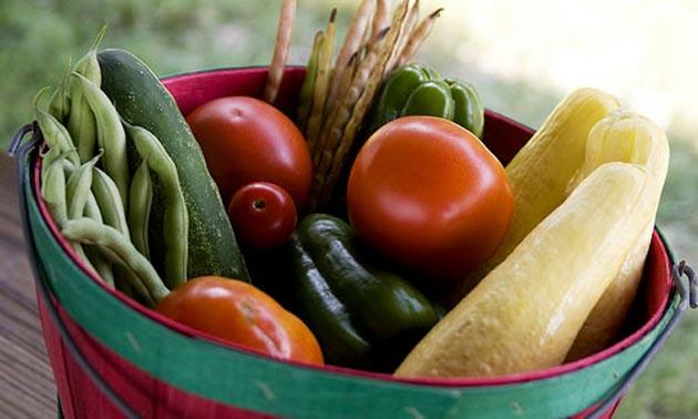 World-Vegetarian-Day-Festival