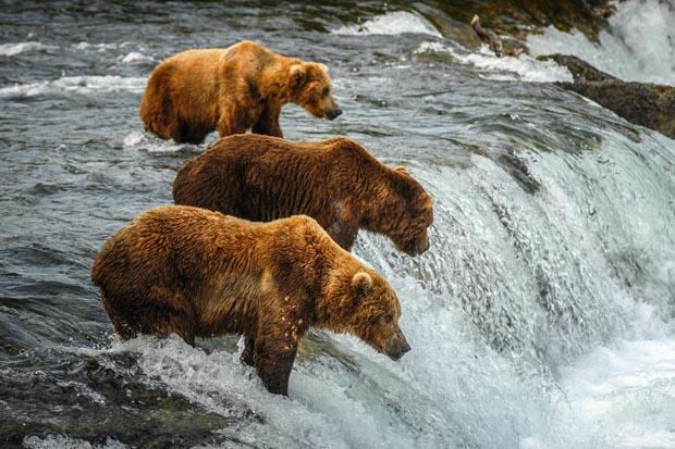 Alaska vacations guide