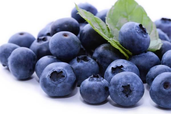 os-blueberry-jpg-20130410
