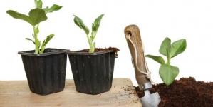 10 Vegetables to Grow in Your Garden