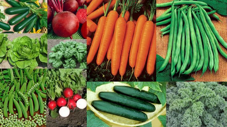10 Easy to Grow Vegetable Seeds and Plants for Beginners