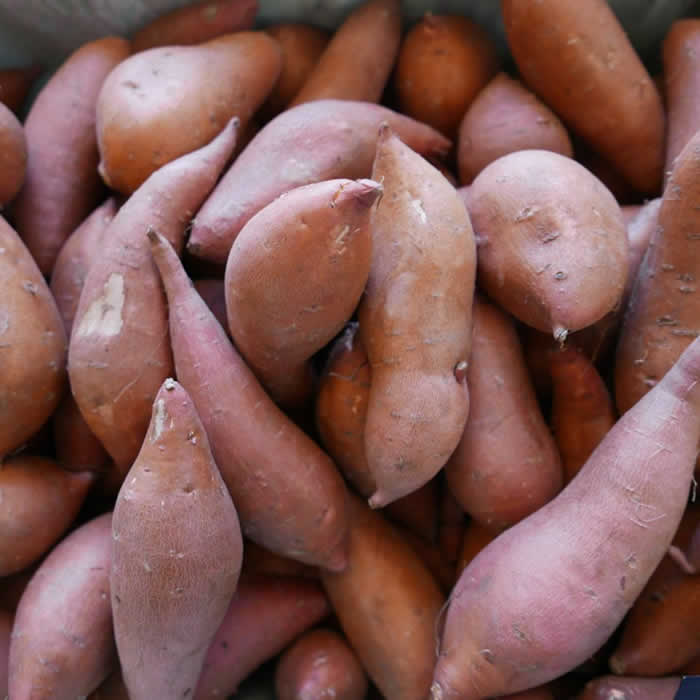 Sweet potato everything