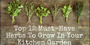 12 Must-Have Herbs To Grow In Your Kitchen Garden