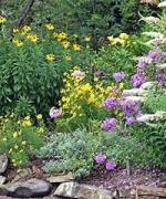 gardening-for-the-summer