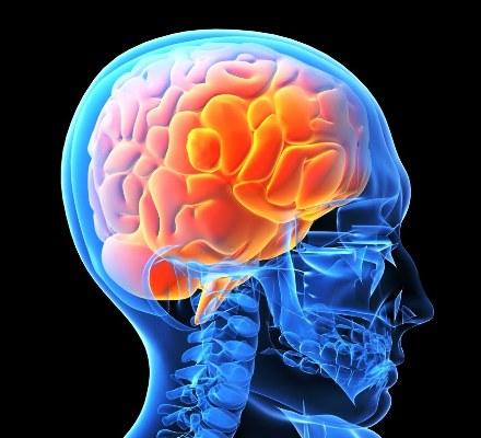 human Brain Blue Image