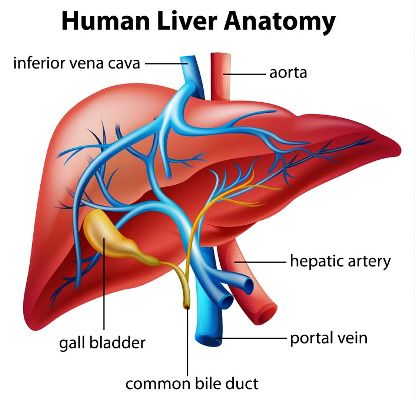 7 Simple Ways To Boost Your Liver Functioning