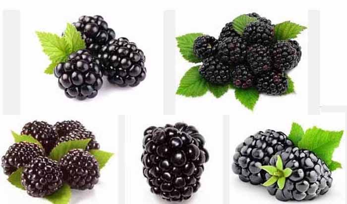 blackberry_healthy_foods