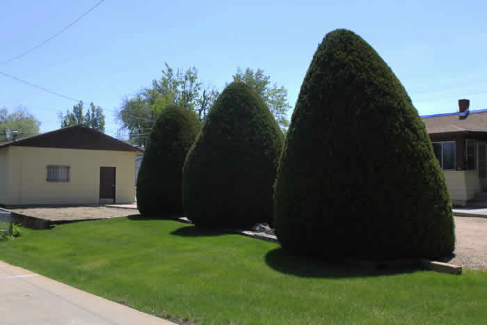 Are you considering trees in your yard