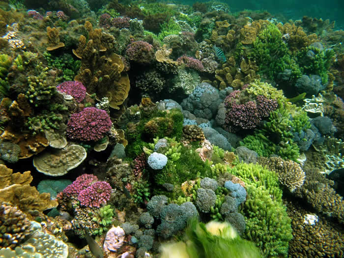 5. Snorkel on Lord Howe Island in Australia